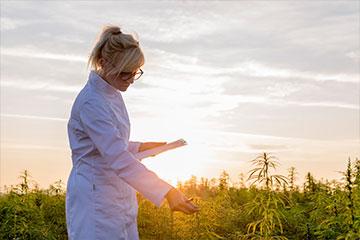 Medical-Cannabis-360-240