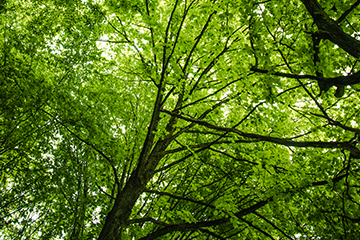 Trees-leaves-green-Thumbnail-360-x2-40